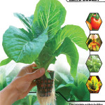 Hydroponics – Growing Without Soil