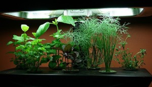 Tips for Home Hydroponic Gardens