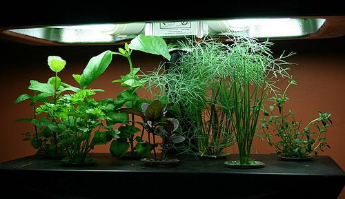 Tips For Home Hydroponic Gardens ...