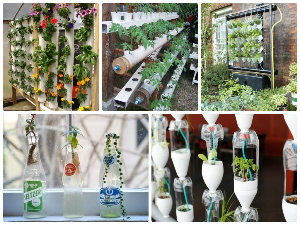 Growing Flower and Vegetables with Hydroponic Gardening