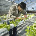 Hydroponics – A Novel Blessing of Science