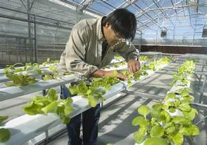 Science of Hydroponics